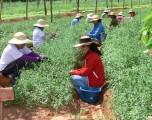 AÑO DE LA AGRICULTURA FAMILIAR 2014 GENERÓ UN IMPACTO EN AMÉRICA LATINA