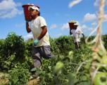 CRECERÁ AGRICULTURA EN AMÉRICA LATINA